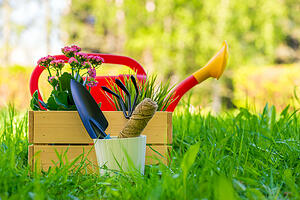 planting new garden